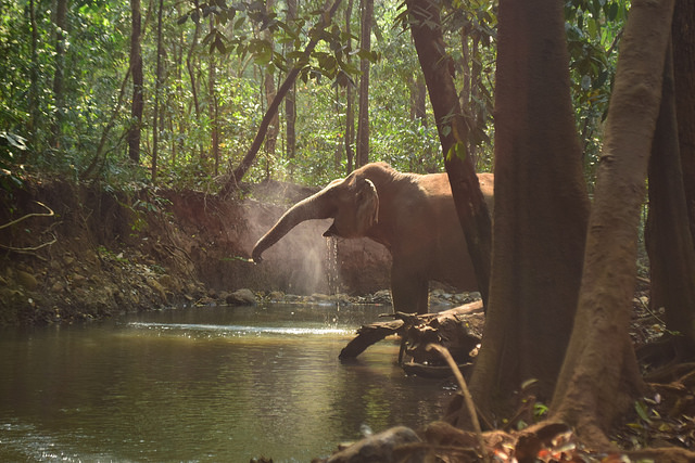 Elephant Valley Project - Cambodia